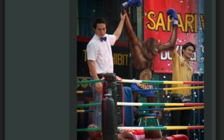 The Show Mustn't Always Go On | Once an popular show in Bangkok, Orangutan boxing Sow, was a big attraction, but it got forbidden in 2006.