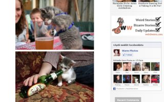 Cats Who Love to Drink Beer | How to drink beer! This cats will show you...Store the beer in a cool place. Beer should always be stored in a fridge.