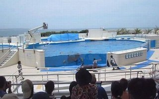 Dolphin Jumps Out of the Pool In Japan | These is really sad... Poor dolphin.
